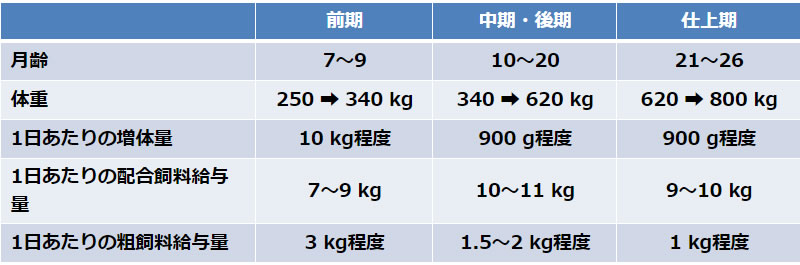 飼育期間と給与される飼料の量(交雑種牛)