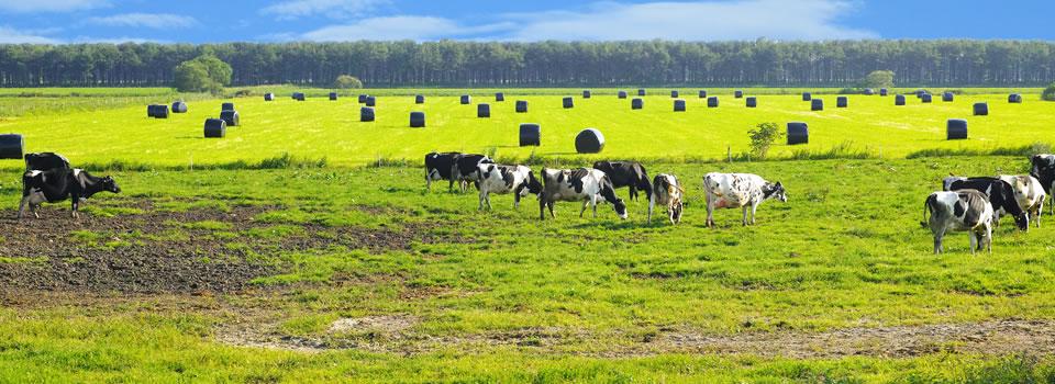 消費者の方々に畜産や飼料製造に関する様々な情報をわかりやすく発信します。